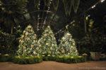 A Longwood Christmas Experience